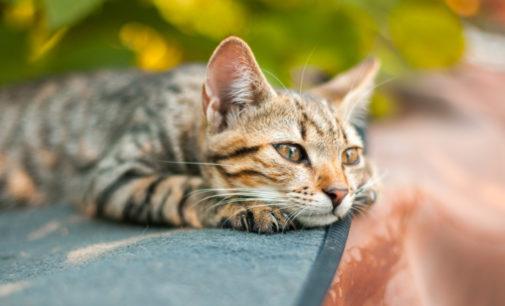В Ухани у 15% кошек нашли коронавирус