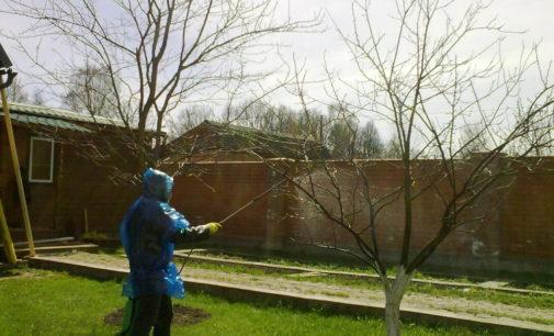 Погода на 5 апреля: в Украине днем потеплеет до 16 градусом, ночью похолодает