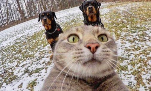Отличный кадр: Котик «сделал селфи» на фоне двух ротвейлеров и взорвал Сеть