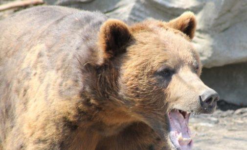 В Варшаве пьяный посетитель зоопарка пытался утопить медведицу