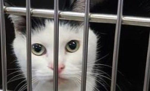 В США ищут хозяев для Пердиты – «худшей кошки в мире»