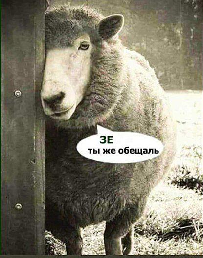 Мем с бараном, посвященный предвыборным обещаниям Владимира Зеленского